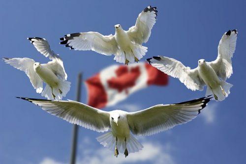 Séjour au Canada pour pratiquer l'anglais