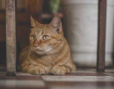 Le chat est-il l'animal de compagnie préféré des français ?